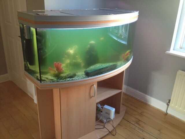 Tropical Fish Tanks – Planning And Setup